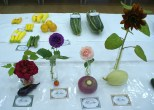Parwich Flower & Vegetable Show 2013