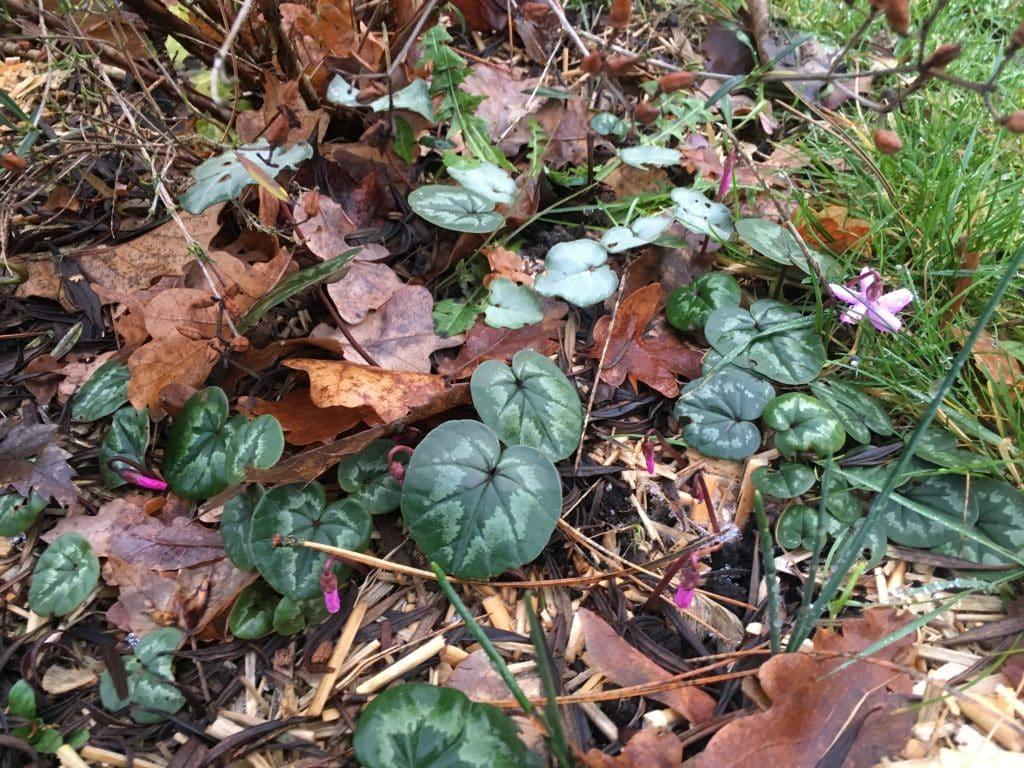 Les fleurs de décembre