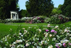 rose-garden-3-300x201