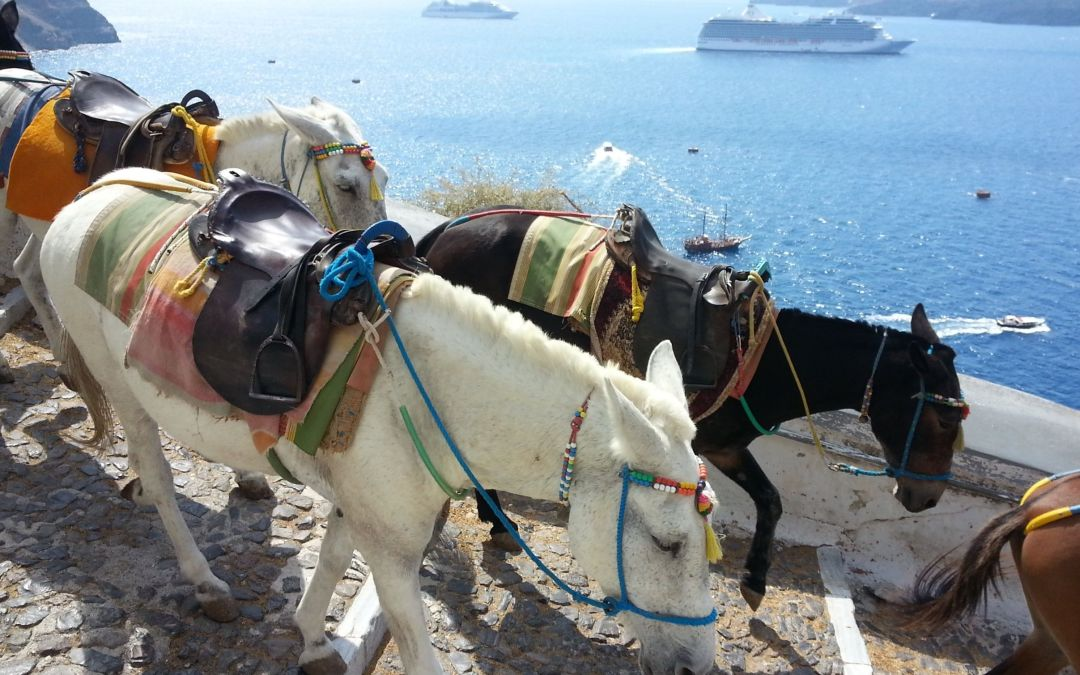Los característicos burros de Santorini