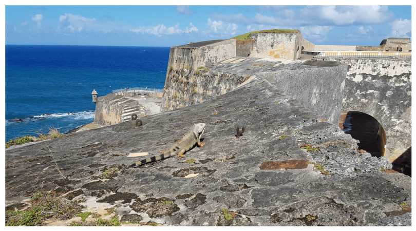 Iguanas adornan el paisaje con un mar impresionante de fondo