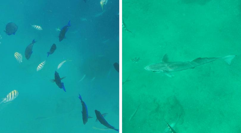 Disfrutando el snorkel en Cayo Icacos, gran cantidad de peces y hasta una inmensa Rémora