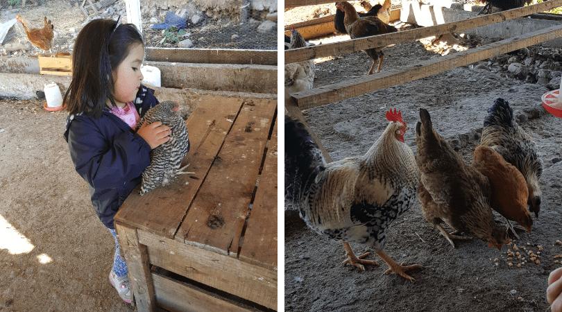 Los niños sin duda disfrutan mucho las actividades con los animales