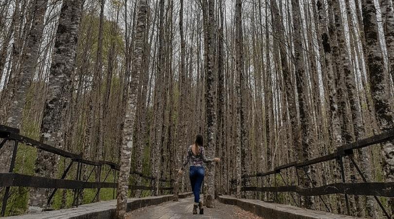 9 razones para visitar Panguipulli todo el año