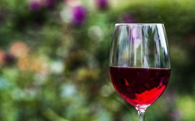 Viñas en el Mar: conoce Chile a través de sus vinos y espumantes