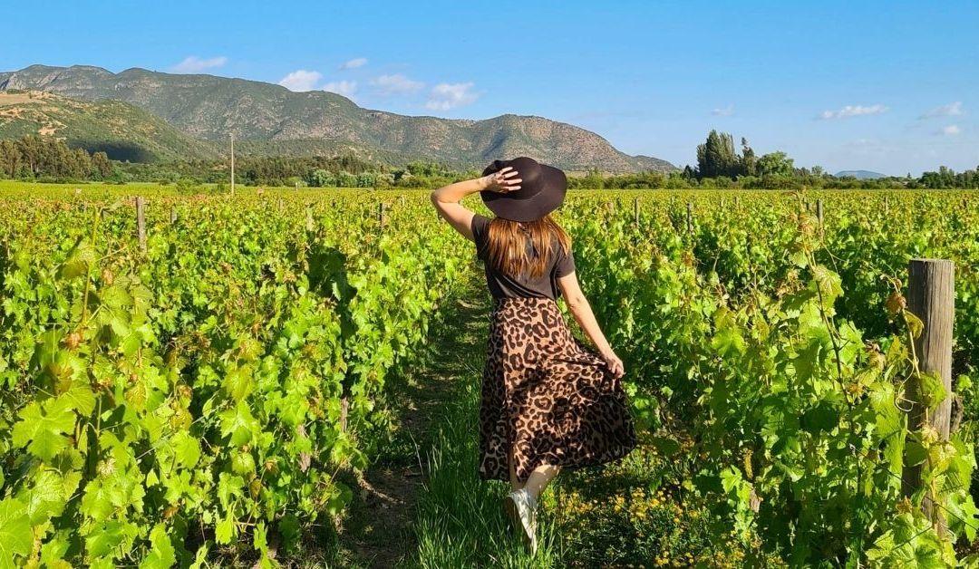 Qué hacer en Colchagua: alternativas originales para amantes del vino
