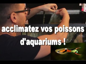 introduire poissons aquarium