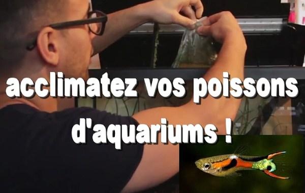 introduire poissons aquarium