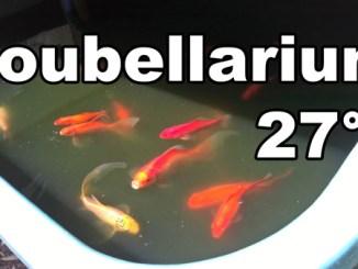 Poubellarium en période de canicule