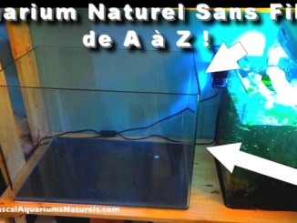 tuto nano aquarium naturel sans filtre !