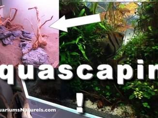L'aquascaping !
