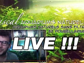 Mon 3ème live youtube !