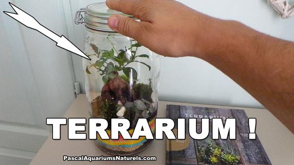 terrarium en pot DIY !