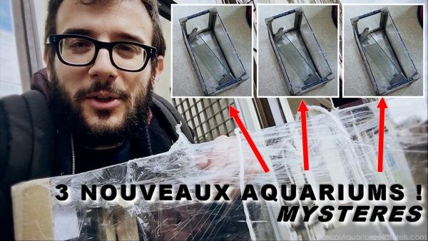 mes 3 nouveaux aquariums