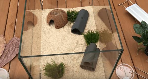 mousses pascal aquariums naturels
