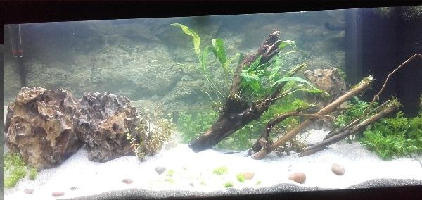 Mon aquarium le lendemain de sa mise en eau