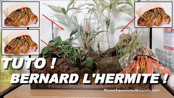 tuto : bernard l'hermite