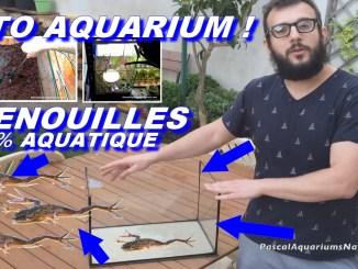 tuto aquarium grenouilles aquatiques