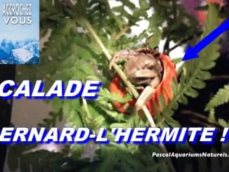 escalade bernard-l'Hermite