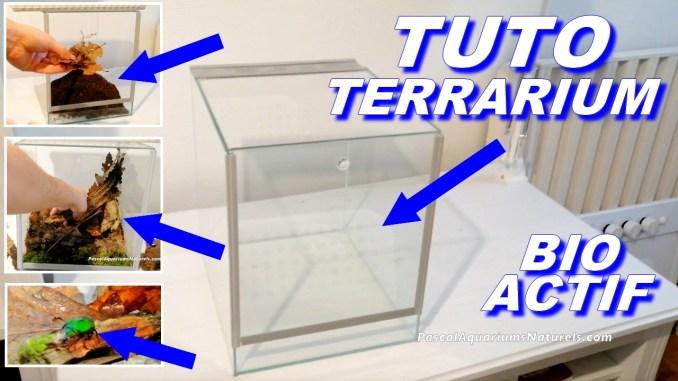 tuto terrarium cetoine
