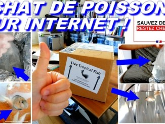 unboxing poissons internet covid19