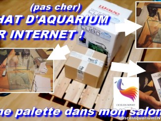 cichlids-import : meilleurs shop aquariophile d'internet !