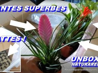 unboxing naturareptiles