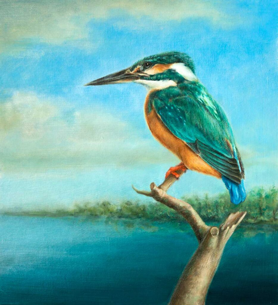 Colorized artwork of a kingfisher bird sitting on a branch.