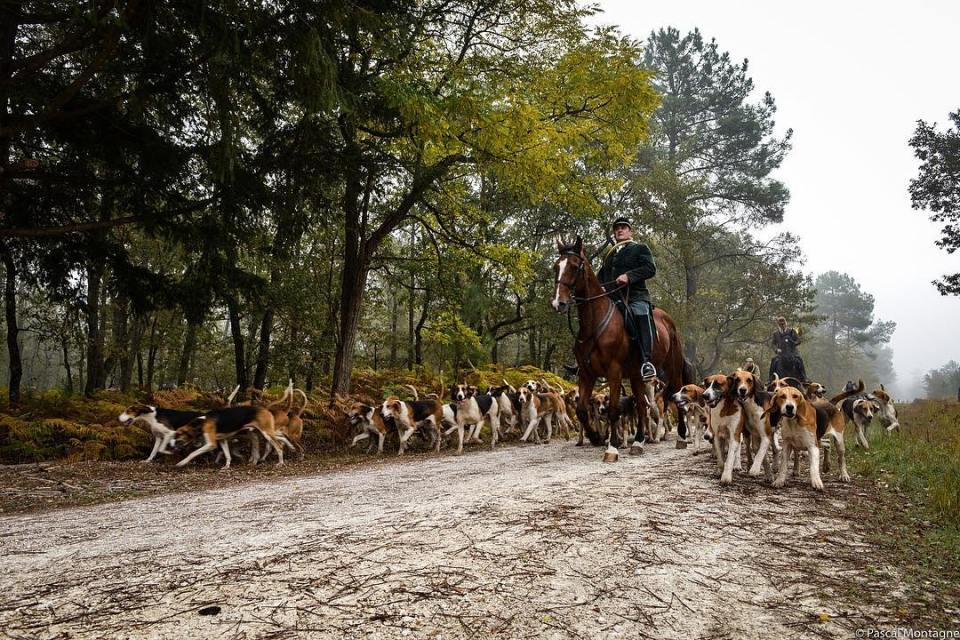 Hunting with dogs. Complete report on https://www.vice.com/fr/article/jour-de-chasse-a-courre-pascal-montagne-arnaud-roy  #hunting #dogs #pack #hunt #hunter #horse #forest #stag #nobleness #report #green #vice #animal #animals #dailypic #instagood #instadaily #picoftheday #tradition #france #country #countryside #sport