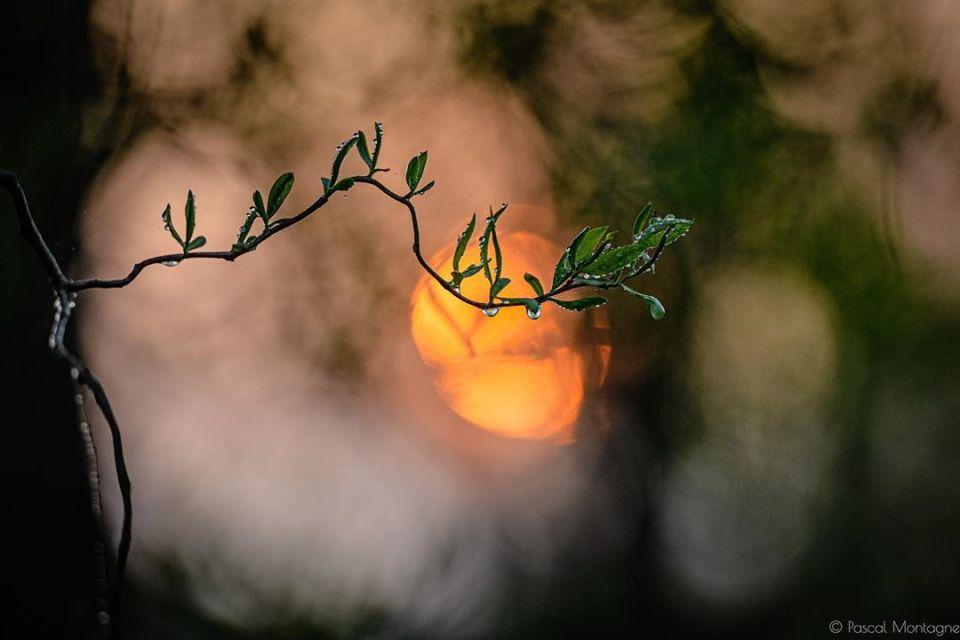 Confinement – day 12 – Few water drops #water #drops #nature #confinement #confinamento #vegetation #tree #sun #backlight