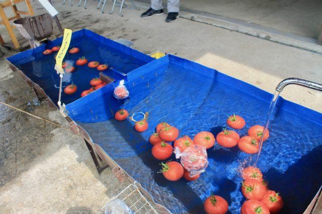 Tomates Shirakawa-go