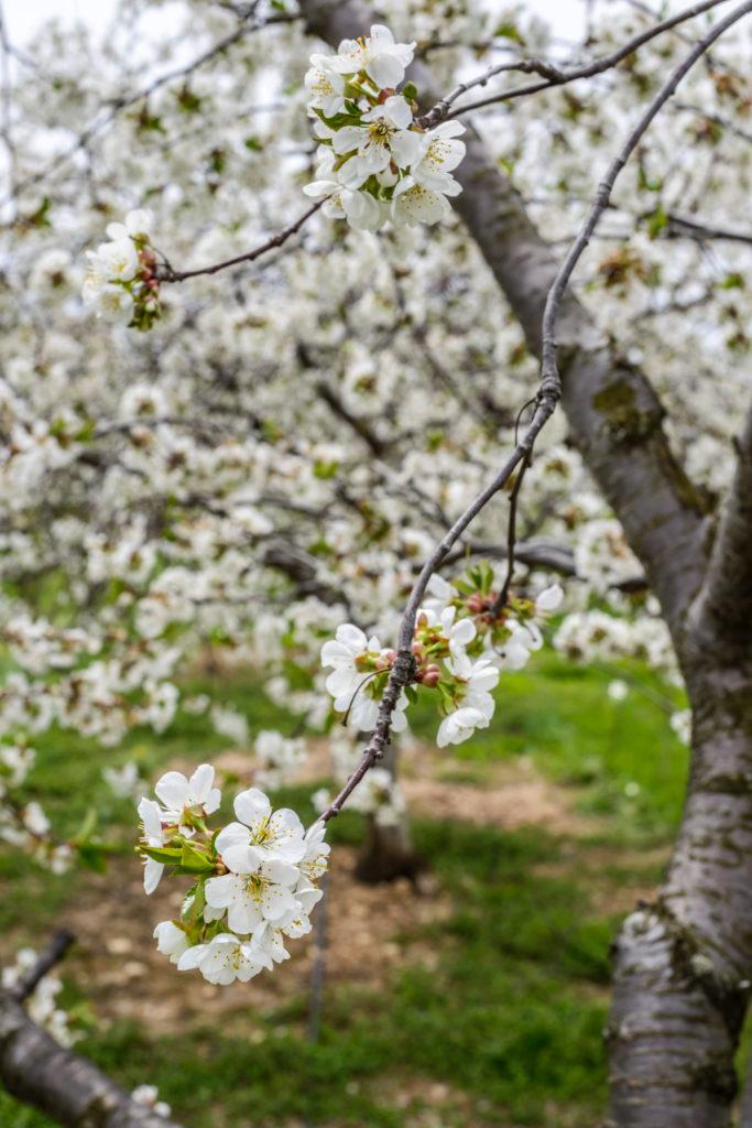 Spring in Door County Wisconsin