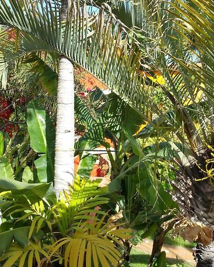 Hotel Pasion Tropical Adults Only Gran Canaria
