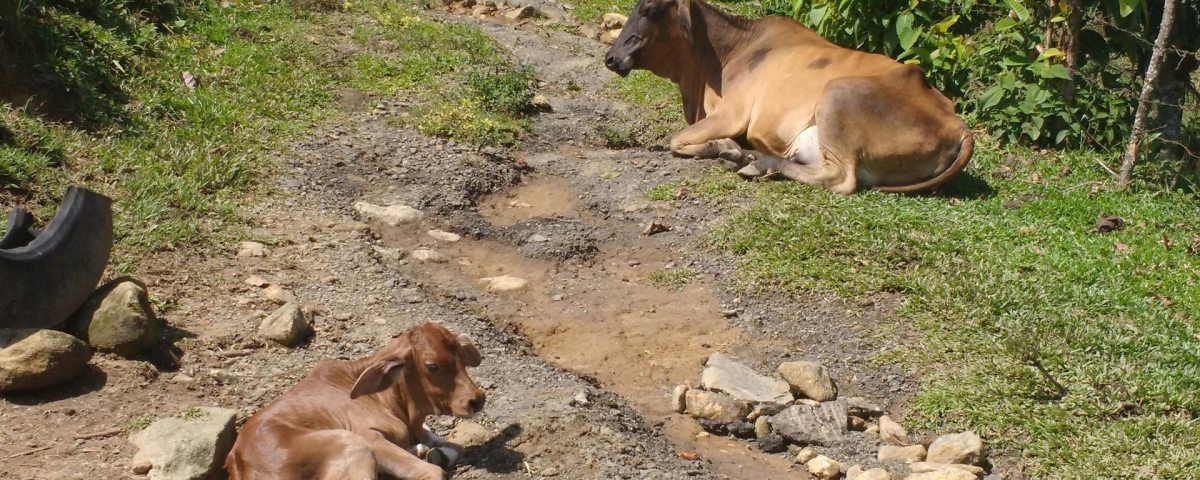 Vaca y ternerito