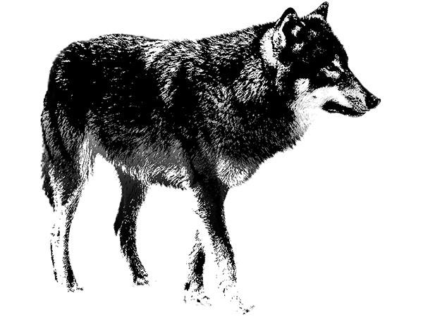 Wolf Basic / 狼-ベーシック
