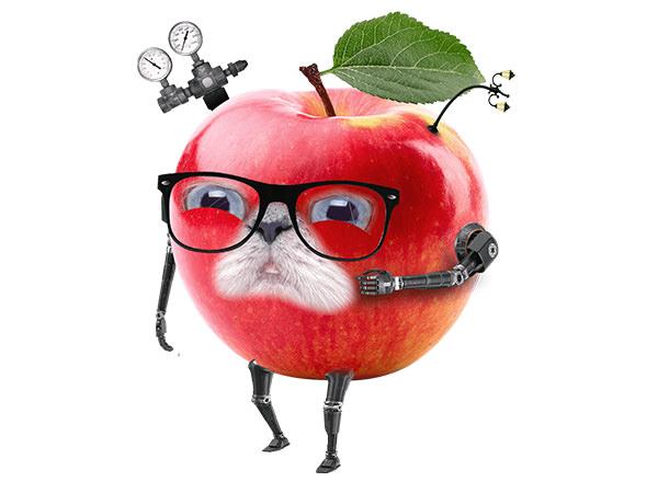 Apple Cat Man(Laugh) / アップルマン(嘲笑)