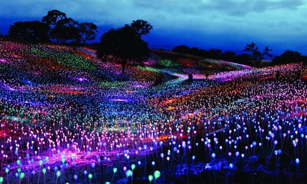 Sensorio Extends Field of Light Through June