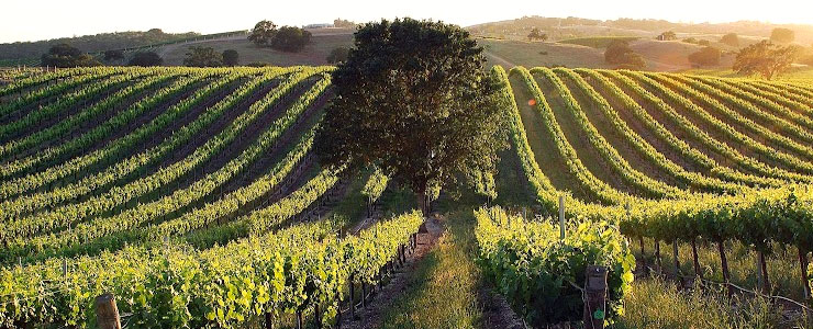 East of Highway 101 Paso Robles Wineries
