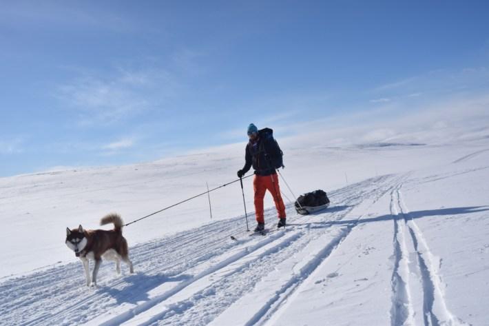 Janouck-chien-husky-aventure-voyage-outdoor-blog-