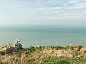 goéland falaise chevington randonnée