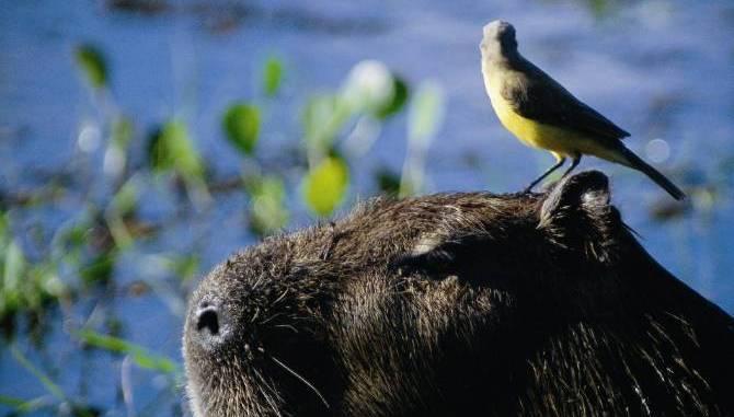 pantanal_MTUR
