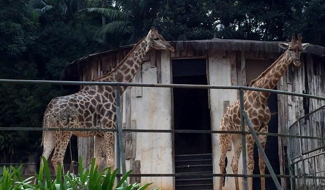 zoologico-de-sao-paulo