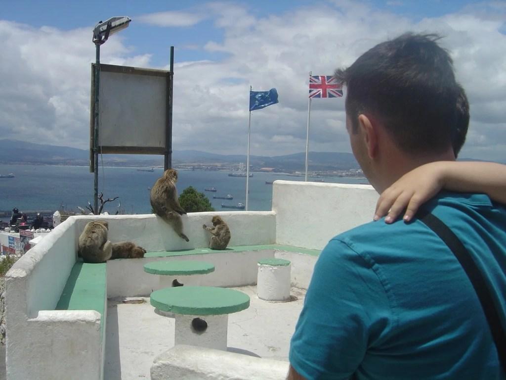 Macacos em Gibraltar