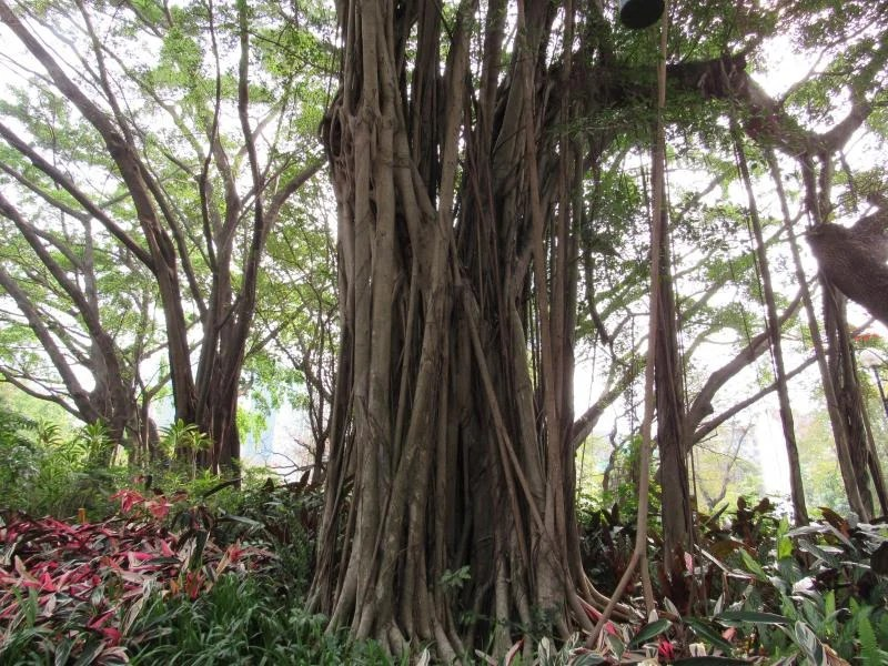 kowloon-park-hong-kong
