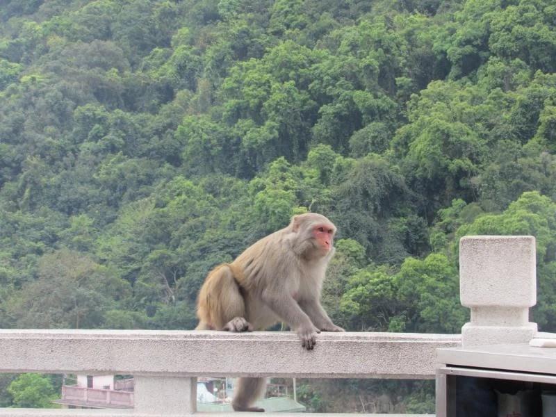 monkey-at-ten-thousand-buddhas-monastery-hong-kong