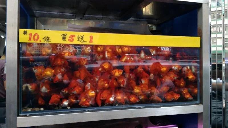 Fish-market-hong-kong