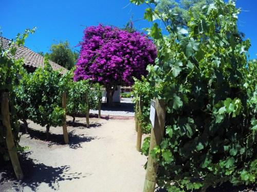 Local onde é explicado os tipos de uvas