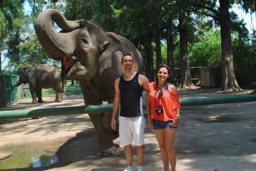 Elefante posando para a foto!