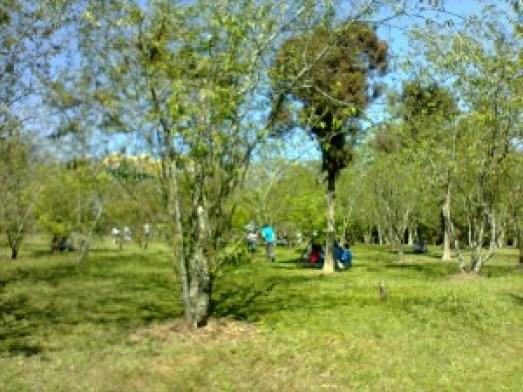 O parque do Carmo atrai muitos visitantes aos finais de semana. Foto: Sueli dos Santos/ Passeios Baratos em SP