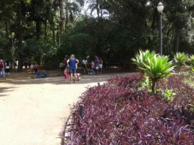 Bosque agradável para caminhadas Foto: Patrícia Ribeiro/ Passeios Baratos em SP